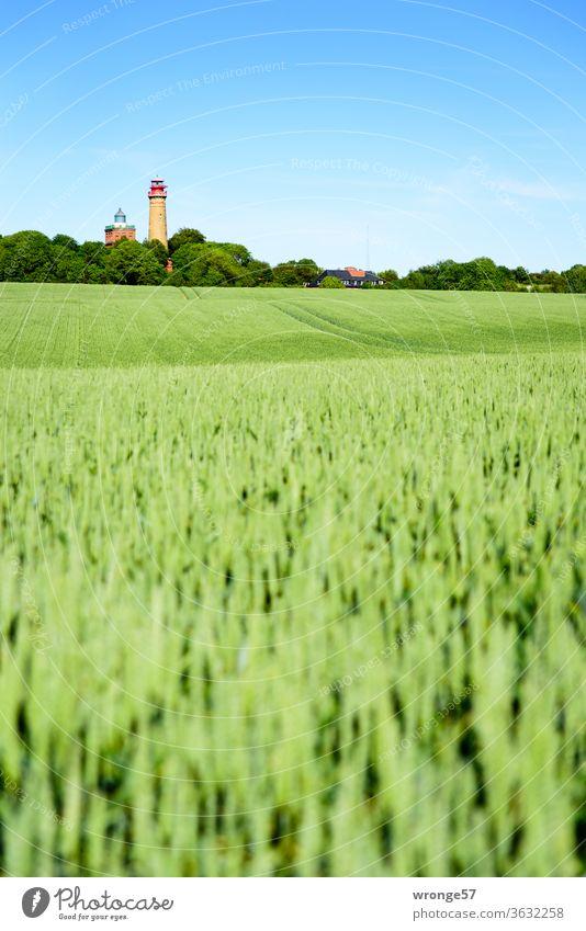 Hinter einem grünen Weizenfeld schauen die 2 Leuchttürme vom Kap Arkona sehnsüchtig in die Ferne Leuchtturm Insel Rügen Ostsee Horizont klein winzig weitweg