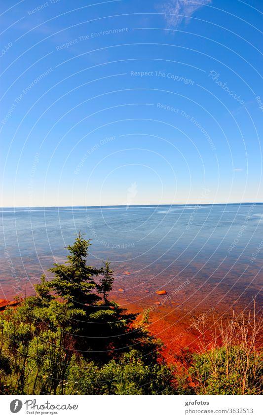 Red Water Prince Edward Island Kanada P.E.I Aussenaufnahme Farbfoto Natur Landschaft menschenleer Tag Umwelt natürlich Tanne Baum Meer Bucht Rot blau grün