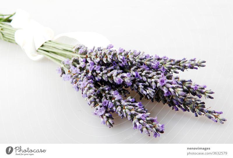 Lavendelblüte isoliert auf weißem Hintergrund. Lavandula (gebräuchlicher Name Lavendel) ist eine Gattung von 47 bekannten Arten blühender Pflanzen aus der Familie der Minzegewächse (Lamiaceae).