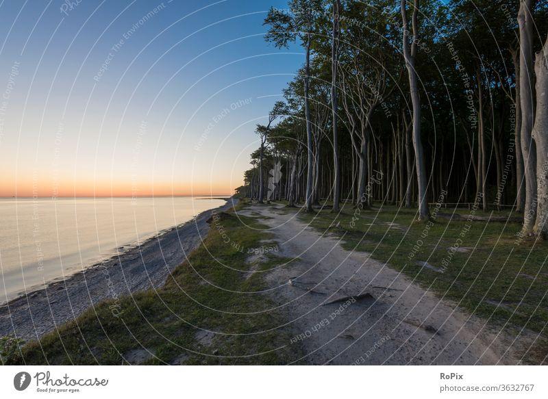 Sonnenaufgang im Geisterwald. Wald Windflüchter Strand beach Küste Meer Sandstrand Muscheln Ostsee Ozean Urlaub Nienhagen Küstenwanderung Erholung Ruhe
