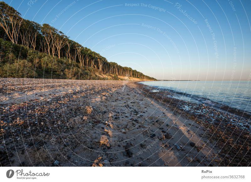Früher Morgen am Ostseestrand. Geisterwald Wald Windflüchter Strand beach Küste Meer Sandstrand Muscheln Ozean Urlaub Nienhagen Küstenwanderung Erholung Ruhe