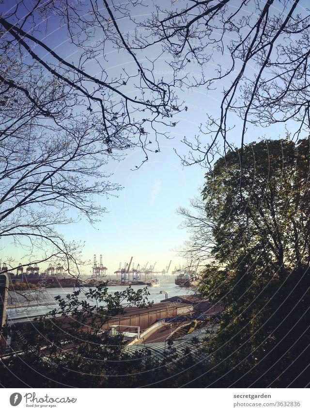 Kluge Krähen kucken koole klobige Kontainer Kräne. Himmel Hafen Hamburg Elbe Wasser Schifffahrt Hafenstadt Farbfoto Außenaufnahme Hamburger Hafen Stadt Fluss