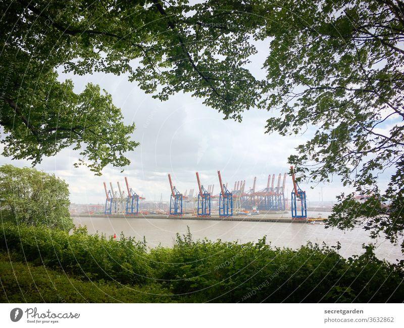 Kranidylle durch Blattfenster in Hamburg. Fernweh Zweige u. Äste containerhafen Gebäude Äste und Zweige Containerterminal Containerschiff Schatten Verkehr