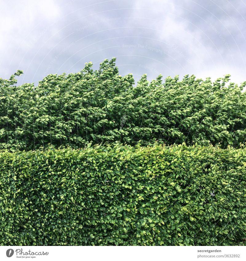 Manchmal ist die Mauer dichter als man sie durchbrechen kann. Natur strauch minimalistisch grafisch Muster gerade Hecke Heckenschnitt Schnitt Schnittführung