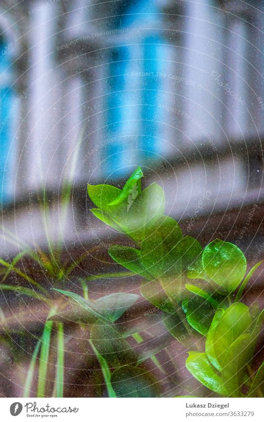 Grüne Pflanze hinter dem Glas mit der Spiegelung des Gebäudes Straßen dekorativ farbenfroh Betrachtungen Blüte Natur Fenster frisch abstrakt Fensterrahmen