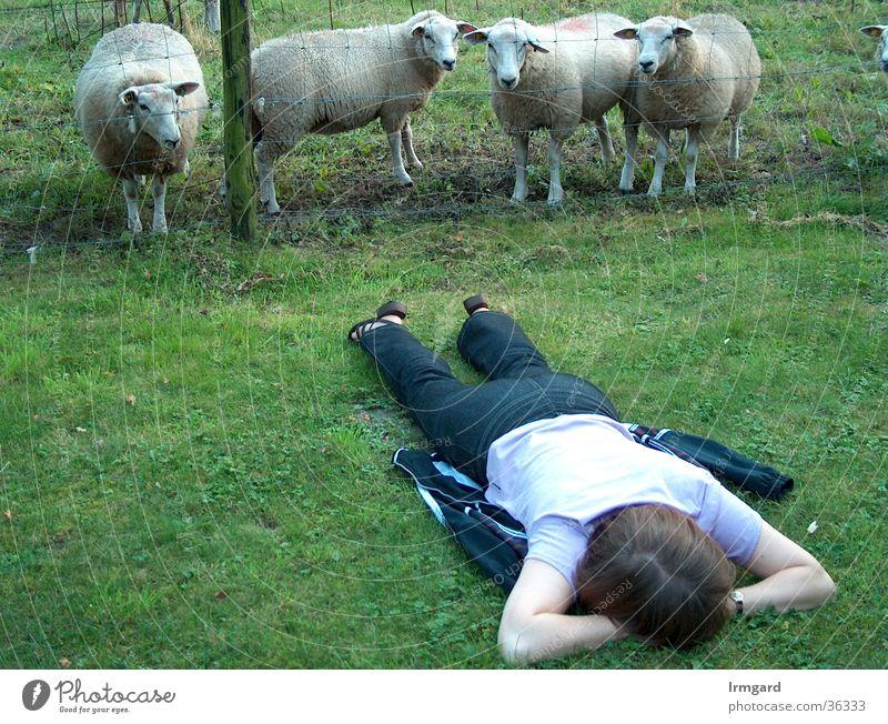 Seltsames Wesen Frau Natur Sommer ruhig Wiese Wellness Pause Schaf