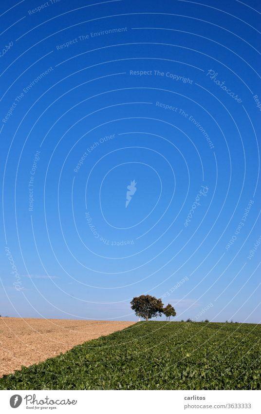 Himmel und Erde Acker Landwirtschaft Baum Nutzpflanzen Feld Natur Ackerbau Sommer blau braun grün Landschaft Umwelt