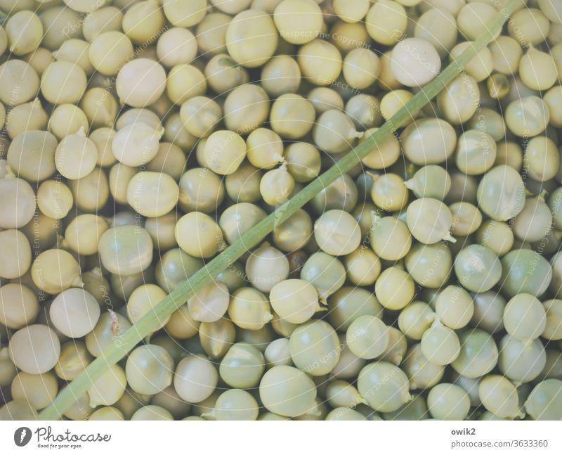 Auf Diät rund grün viel Erbsen klein nah Gemüse gesund lecker eigene Ernte Halm Lauch schräg diagonal versammelt Ernährung frisch Lebensmittel Farbfoto