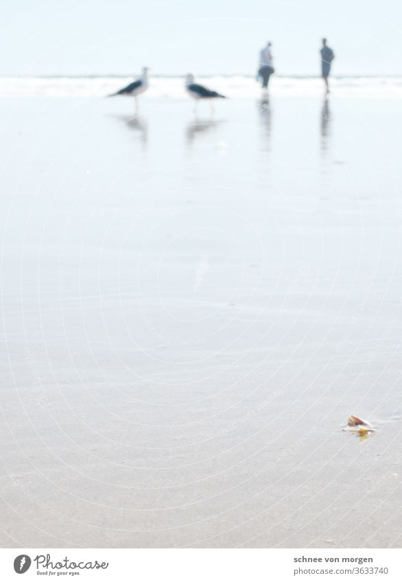 monstervögel im unscharfen bereich möwen stand strand atlantik portugal menschen meer wasser horizont sonne hell wellen natur Ferien & Urlaub & Reisen Küste