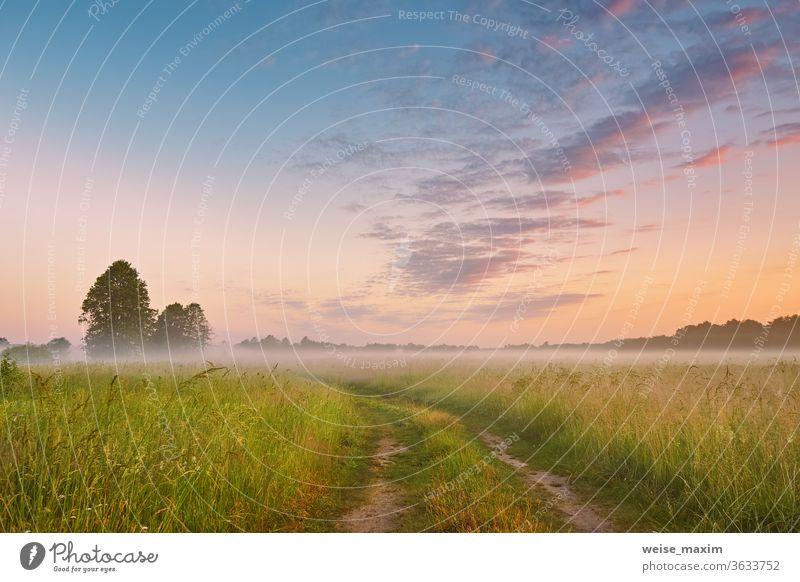 Unbefestigte Strasse, wilde Wiese im Morgennebel. Ländliche Sommerlandschaft im Sonnenaufgang Nebel Straße Gras Natur Schmutz Landschaft Himmel Feld Weg