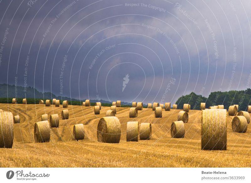 Nach der Ernte warten unzählige Strohballen bei drohendem Gewitter auf den Abtransport Heuballen Gewitterwolken Unwetter einbringen Spuren Feld Sommer