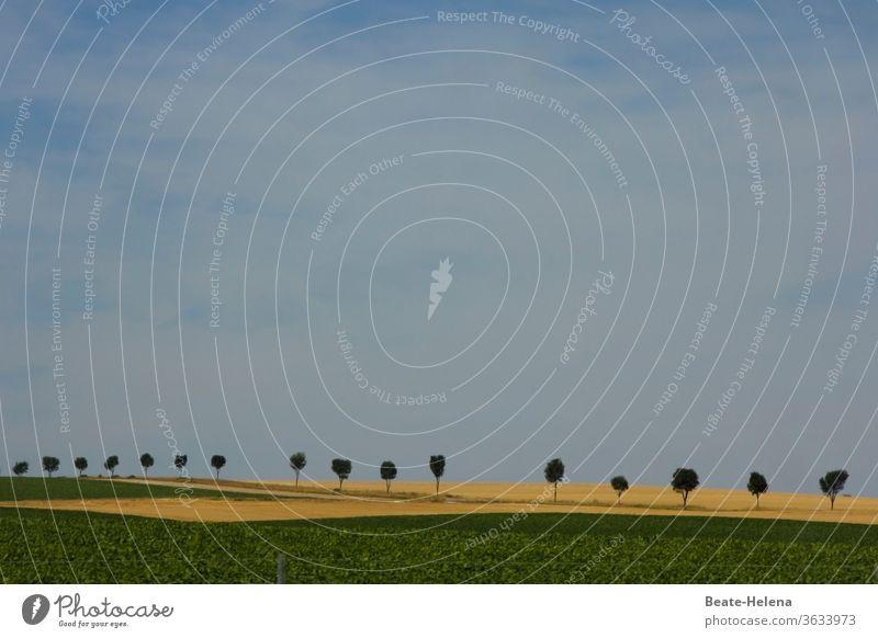 Baumreihe an von Feldern gesäumter Straße unter Sommerhimmel Allee Alleebäume Natur Außenaufnahme Wege & Pfade Himmel himmelblau Punkt Punktgenau Geometrie