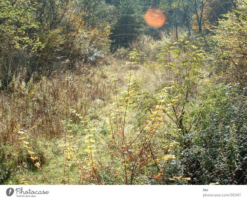 Herbstgras Wald Wiese Gras Sträucher Bundesland Burgenland