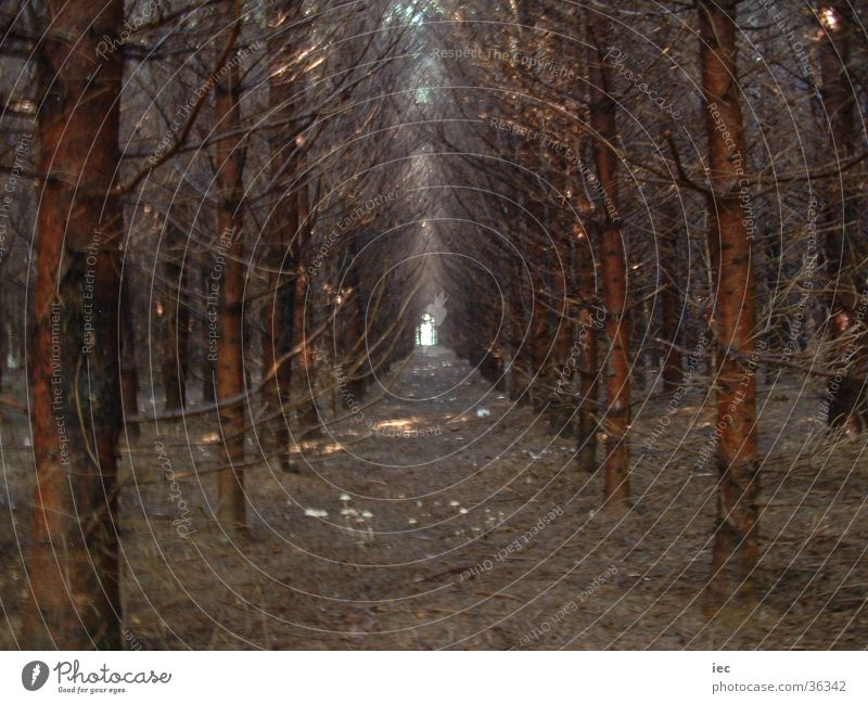 Finsterer Wald dunkel Nadelbaum Fichte