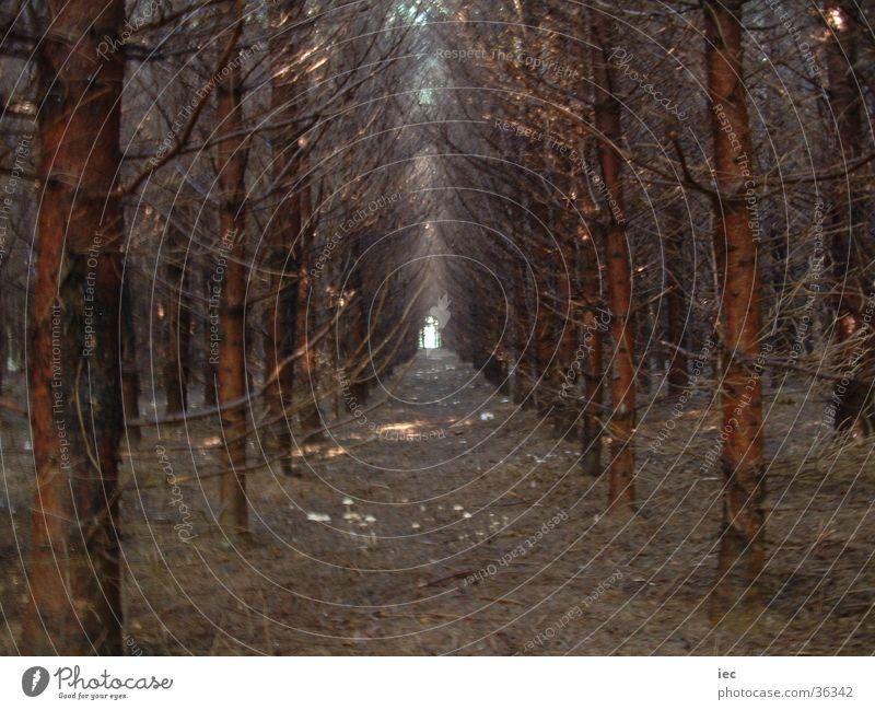 Finsterer Wald Wald dunkel Nadelbaum Fichte