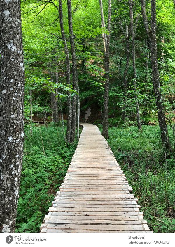 erhöhter Holzpfad durch den Wald Path Pfad Steg Kroatien Einsam Einsamkeit Urlaub grün Wege & Pfade spazieren spatziergang Kurve Straße