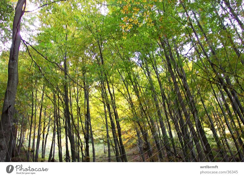 Herbstwald Baum grün Blatt gelb Wald Berge u. Gebirge Ast Baumstamm