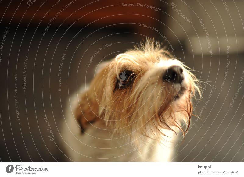 Ich bin unschuldig! Hund weiß rot Tier schwarz Tierjunges feminin Traurigkeit lustig klein natürlich braun stehen warten beobachten weich