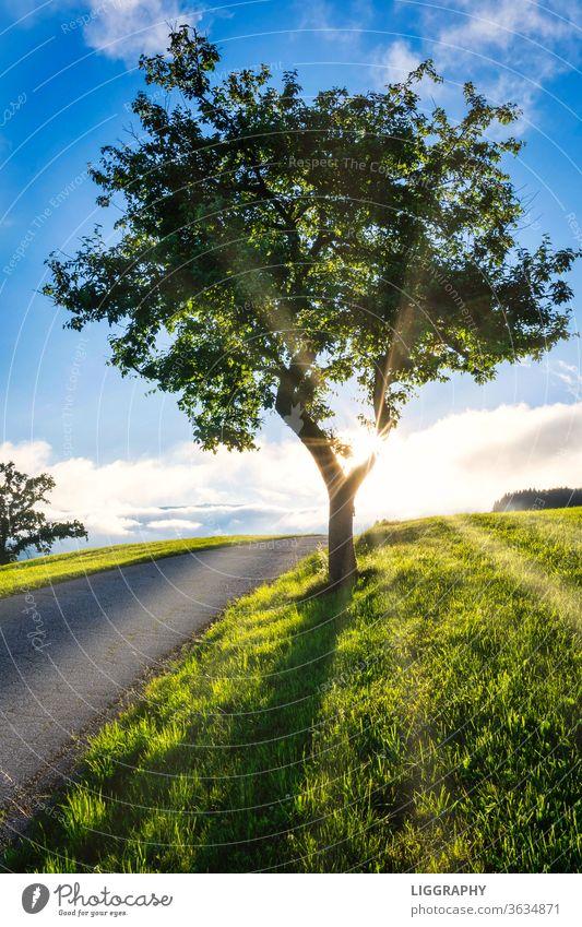 Ein Baum im wunderschönen Lavanttal. Baumstamm Blatt Sonne Himmel Schatten Zweig Sommer Sonnenstrahlen Menschenleer Natur Licht Außenaufnahme Gegenlicht
