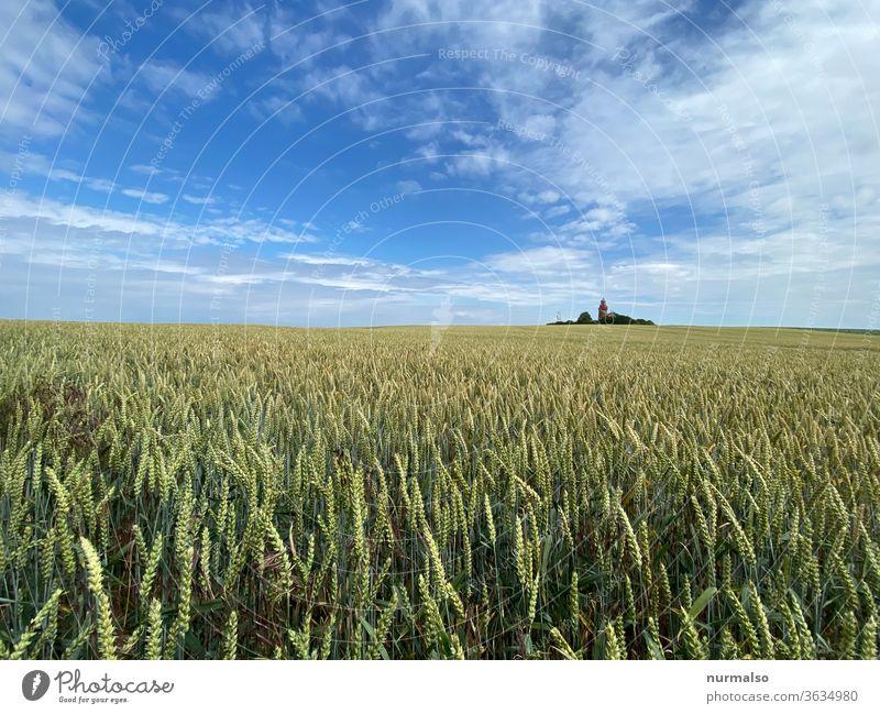 Unreif mit Turm Feld Getreide Leuchtturm Acker Landwirtschaft norden Leuchtfeuer Insel Korn natur nachhaltig grün sauber Himmel