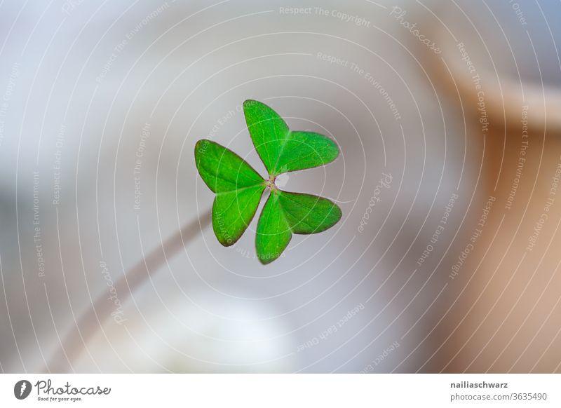 Kleeblatt Blatt Glück Glücksbringer Silvester u. Neujahr Natur Pflanze Pflanzenteile grün Farbe Gefühle Hoffnung Religion & Glaube vierblättrig Leben Blume