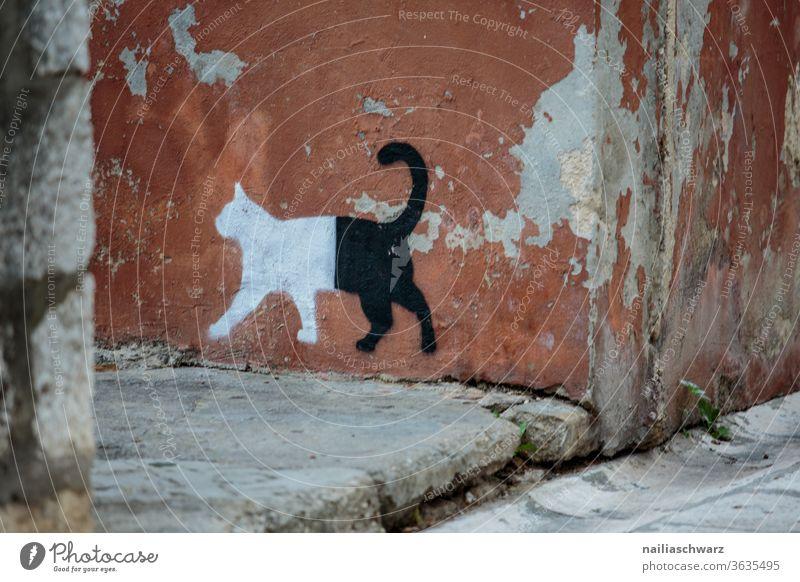 Katze zeichnen Zeichnung Fassade Zadar Altstadt Altstadtgasse Gasse stufe schwarzundweiß weg Wege & Pfade tier Stadt Gebäude Gebäudeteil gebäudefront Kunst Art