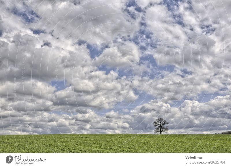 Russeneiche bei Michelstadt russeneiche michelstadt odenwald hessen deutschland europa baum feld acker himmel wolke wolken wolkenwolkenhimmel einzeln alleine