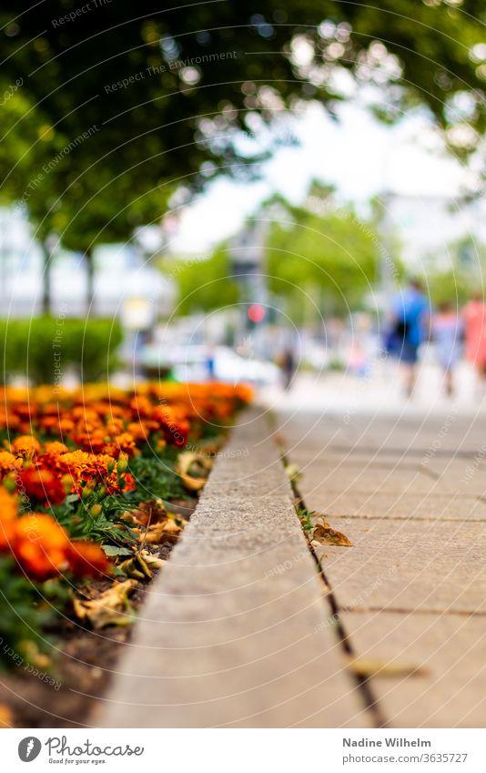 Blumen säumen einen Gehweg in Chemnitz orange führender Weg Stadt Stadtzentrum Stadtzentrum & Innenstadt Menschen wenig tiefenschärfe Schwache Tiefenschärfe