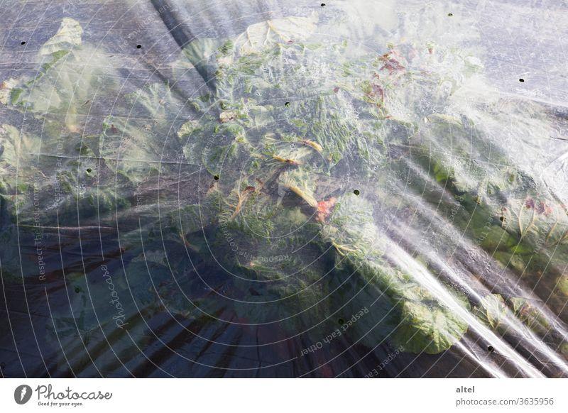 Pflanztunnel pflanztunnel plastik Kunststoff Umwelt Plastikfolie Gemüse anpflanzen Folientunnel Schlauchfolie Gemüseanbau Gemüsebauer Schutz Feld Außenaufnahme