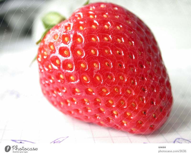 strawberry Pflanze rot Sommer Ernährung Gesundheit Frucht frisch Beeren Erdbeeren Mahlzeit Vegetarische Ernährung