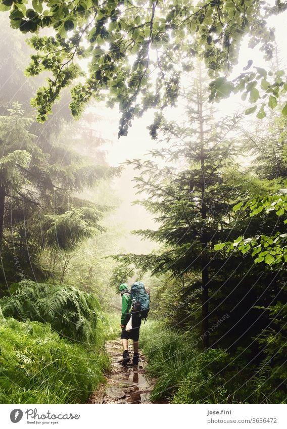Mann mit Rucksack läuft im Wald durch Regen. Wanderer Outdoor trekking wandern Junger Mann Pfütze Baum Baumkrone Regenjacke nass Ferien & Urlaub & Reisen