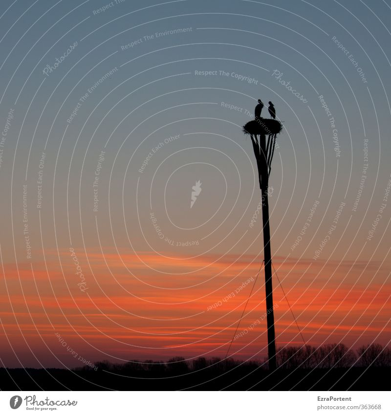 sagt er zu ihr ... Himmel Natur blau Sommer Pflanze Sonne Baum rot Erholung Landschaft Tier Wolken schwarz Umwelt Frühling natürlich