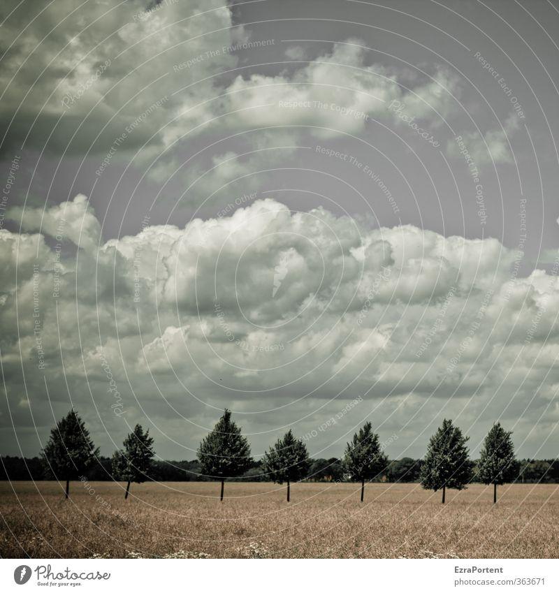 die rumstehenden sieben Umwelt Natur Landschaft Pflanze Himmel Wolken Frühling Sommer Klima Wetter Baum Gras Nutzpflanze Wiese Feld gelb grün weiß Zusammensein