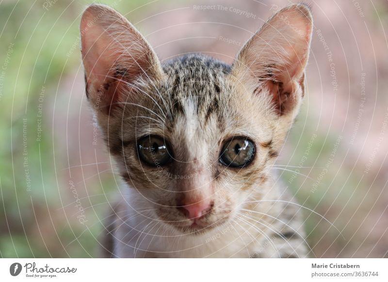 Porträt eines scheuen streunenden Kätzchens Tierschutz Obdachlosigkeit streunendes Kätzchen Unschuld verwundbar schüchternes Kätzchen Verloren suchen niedlich
