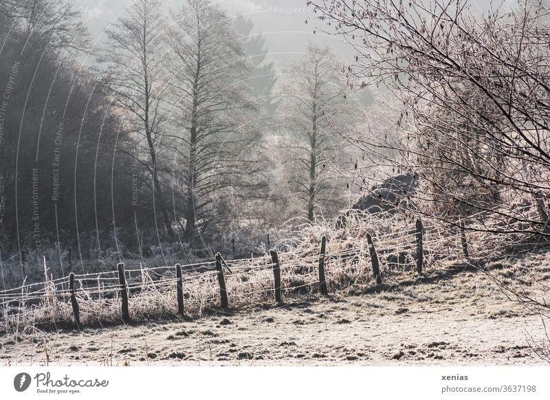Winter is coming / Im Winterwunderland steht ein Zaun mit Schnee und Frost vor winterlichen Bäumen Natur Landschaft Wald frieren kalt Eis Gedeckte Farben