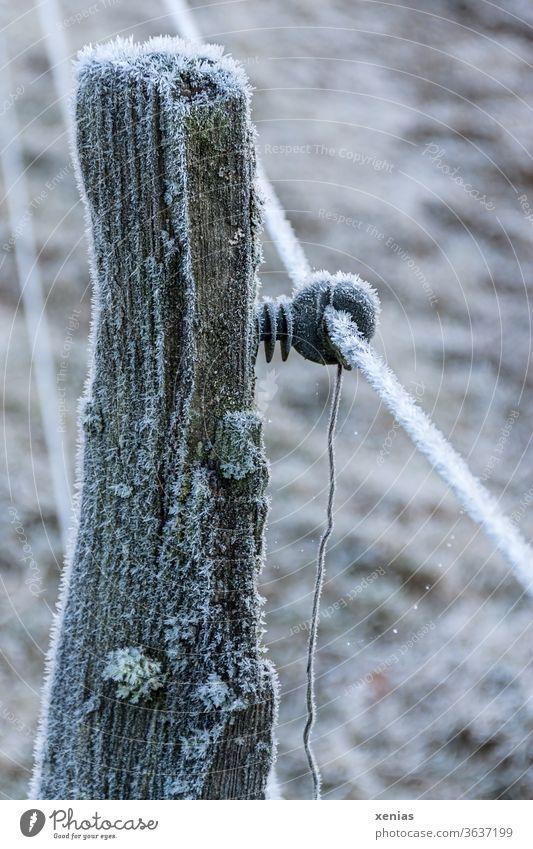 Holzpfosten eines Elektrozauns mit Raureif im Winter Zaun Eis gefroren Frost Schnee frieren kalt Pfosten Eiskristall Gedeckte Farben Grenze gesperrt Abgrenzung
