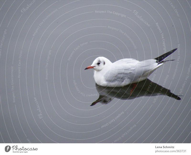 Möwe Natur Wasser Erholung Einsamkeit ruhig Tier Umwelt Freiheit Stimmung Vogel Idylle Flügel Flussufer harmonisch Umweltschutz