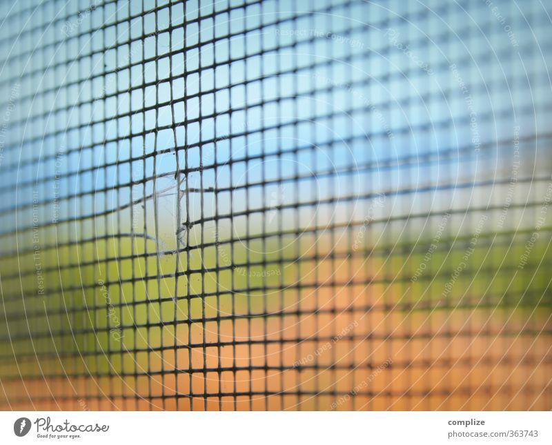 Fliegengitter ohne Fliege Tier fangen fliegen ausbrechend Flucht Netz Riss Loch Stechmücke Mückenschutz Ausgang Farbfoto Nahaufnahme Detailaufnahme