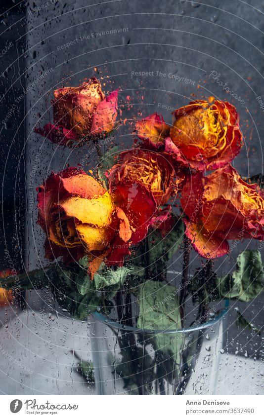 Strauß schöner verblühter Blumen durch das Glas mit Regentropfen Roséwein trocknen Blütenblatt Vorbau Blatt Herz orange blau Fenster Tropfen Wasser gebrochen