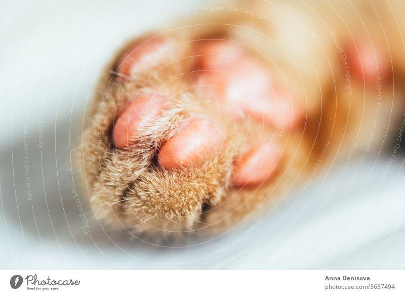 Winzige Pfoten eines Ingwer-Kätzchens Katzenbaby niedlich sich[Akk] entspannen Decke Haustier Baby heimwärts gemütlich Komfort aussruhen fluffig schlafen