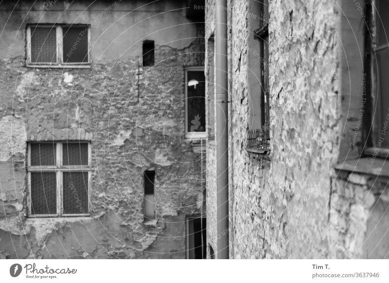 Blick aus dem Fenster Berlin Prenzlauer Berg Schönhauser Allee Stadt Stadtzentrum Außenaufnahme Altstadt Hauptstadt Menschenleer Tag Haus Altbau Bauwerk Gebäude
