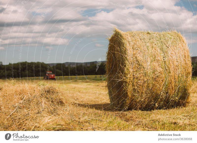 Heurolle auf trockenem Gras im Feld rollen Heugarben Ernte Ackerbau trocknen sonnig getrocknet Natur ländlich Sonne Sommer idyllisch Landschaft Harmonie Cloud
