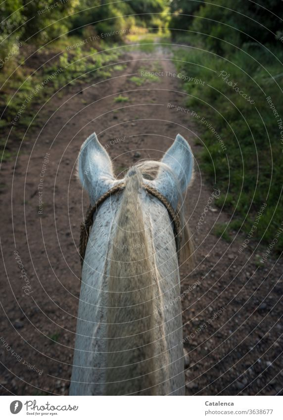 Symmetrie | Pferdehals und Weg aus dem Blickwinkel des Reiters Tier Nutztier gestutzte Mähne Schimmel Außenaufnahme reiten Gras Büsche Pflanzen Natur Grün weiß