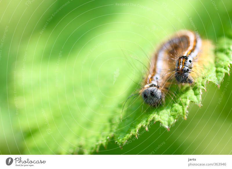 hinten wie vorn Pflanze Tier Frühling Sommer Blatt Wildtier Fell Natur Raupe Haare & Frisuren Farbfoto mehrfarbig Außenaufnahme Nahaufnahme Detailaufnahme