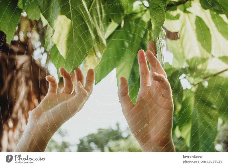 Nahaufnahme einer weiblichen Hand, die die Blätter eines Baumes zupft, Konzept der Naturnähe Umwelt Frau Finger frisch Garten Mädchen grün Ernte organisch