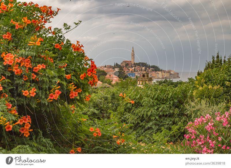 Im Vordergrund blühende Trompetenblume und Oleander im Hintergrund weit entfernt ist die Altstadt von Roninj in Kroatien zu sehen Istrien Blumen Blüten Blühen