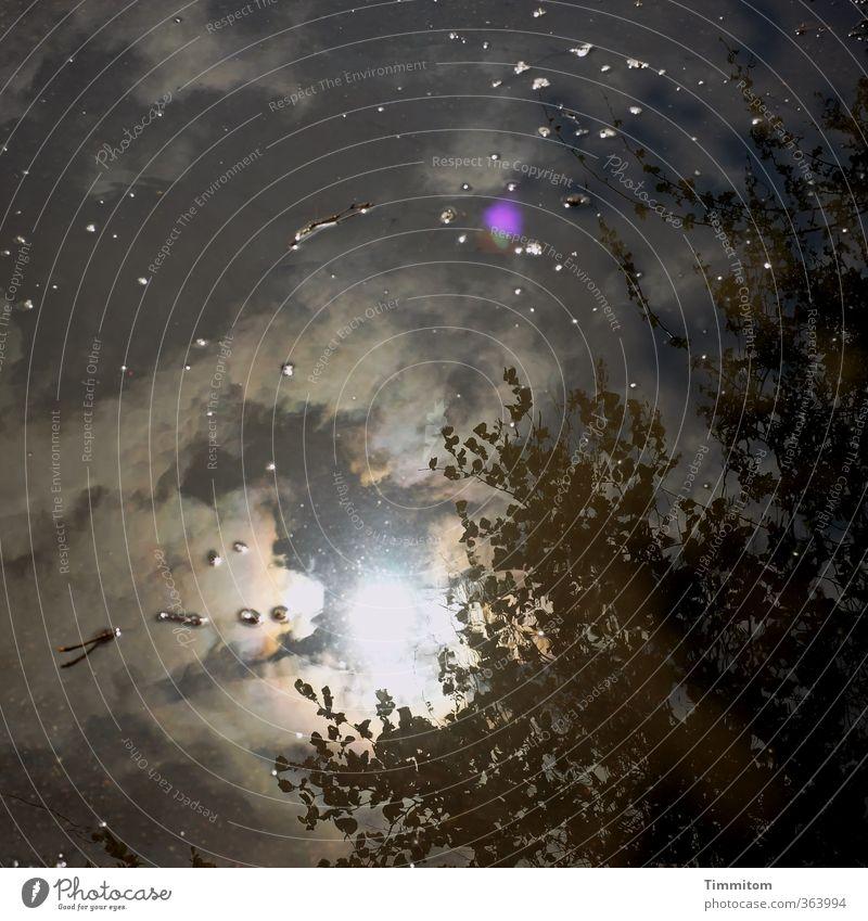 Alles wird gut. Umwelt Natur Pflanze Wasser Himmel Sonne Klima Wege & Pfade leuchten dunkel Gefühle Pfütze Reflexion & Spiegelung Blendenfleck Weltall Märchen