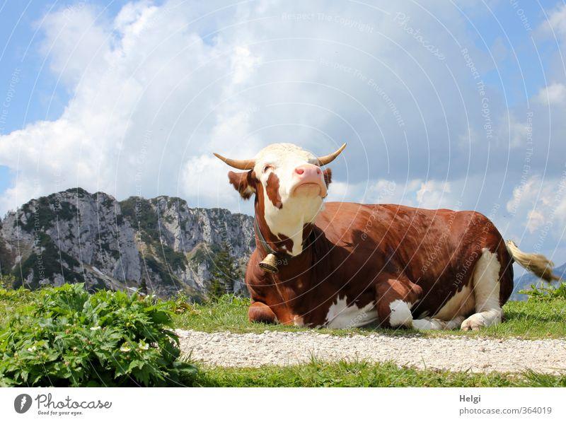 AST6 Inntal | noch ne Qu... Himmel Natur blau grün weiß Pflanze Landschaft Tier Wolken Ferne Umwelt Berge u. Gebirge Gras Frühling natürlich braun