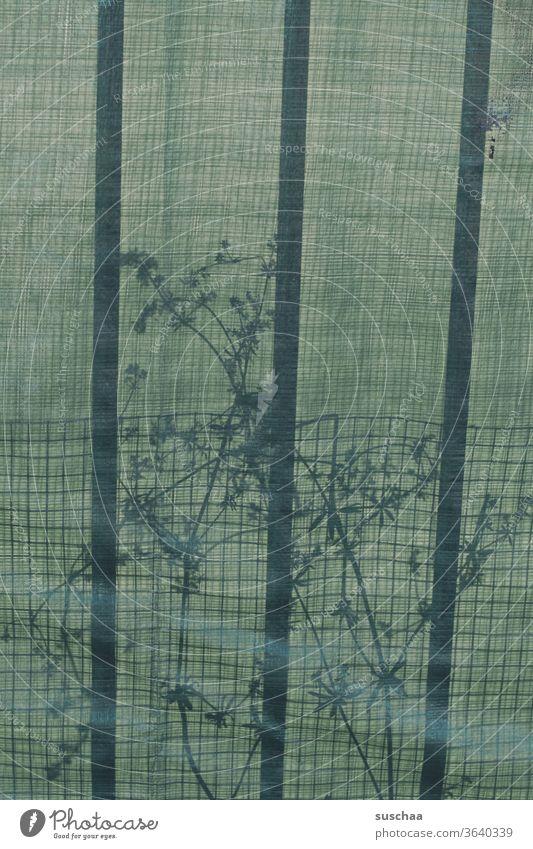 schattenspiel mit pflanze und linien Licht Schatten durchsichtig Plane Plastikplane Schattenspiel Pflanze Unkraut Gewächs Gitter Gitterstreifen Detailaufnahme