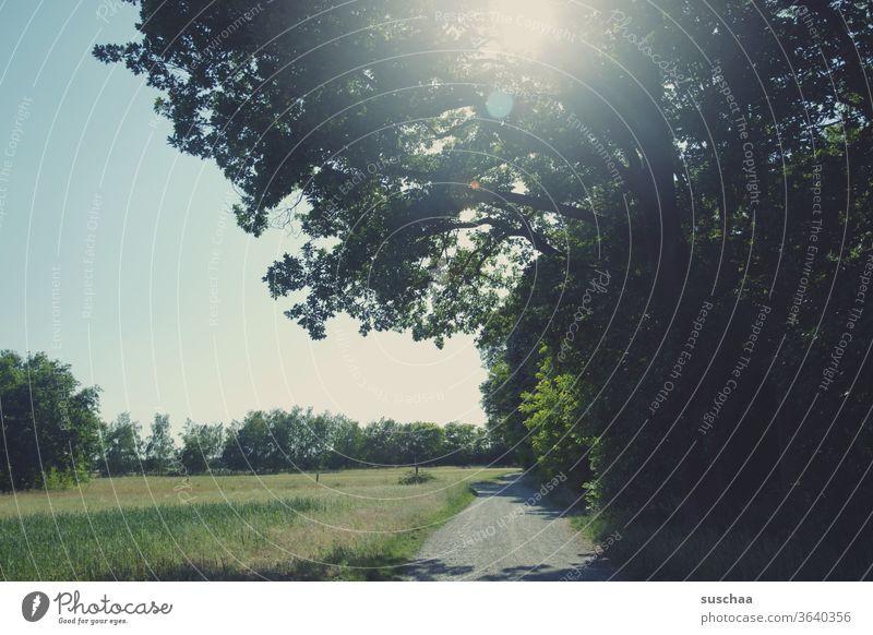 Feldweg mit Wiese und Baum Natur Landschaft Büsche Sommer Frühling frisch Himmel Gegenlicht Blendenflecke Sonnenlicht Ökosystem Schönes Wetter Menschenleer
